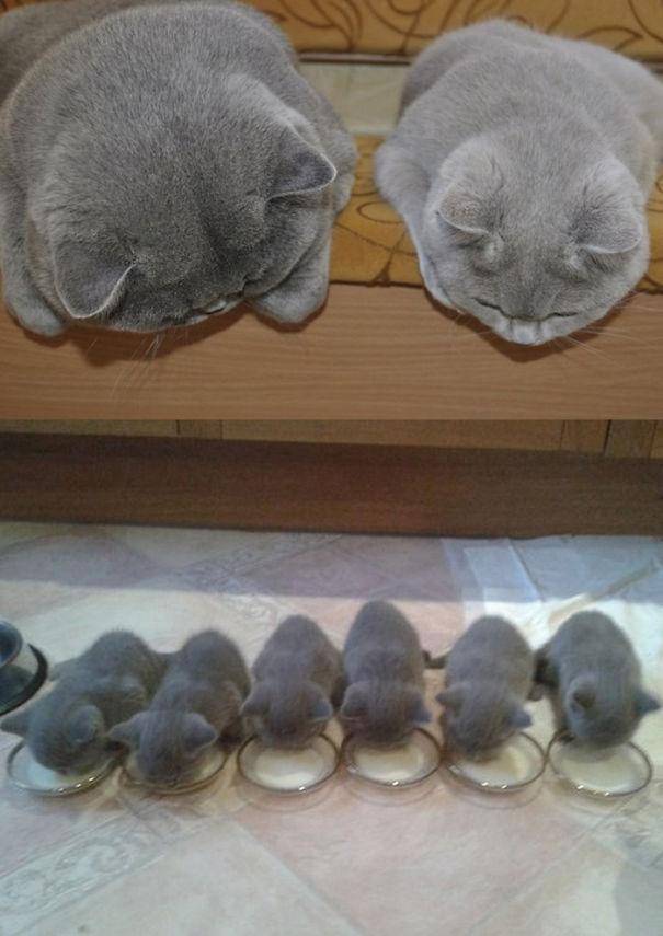 Gurulu Kediler