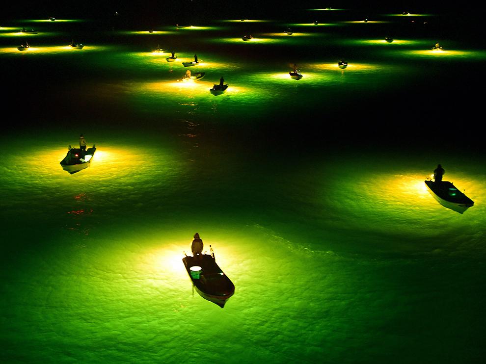 Gece Balıkçıları, Japonya