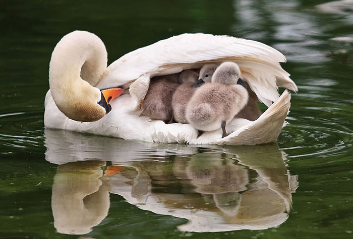 Kuşlar Ve Bebekleri
