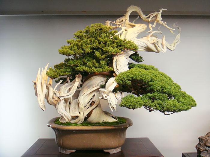 Bonsai Ağaçları 10
