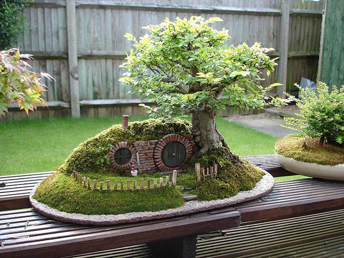Bonsai Ağaçları 8