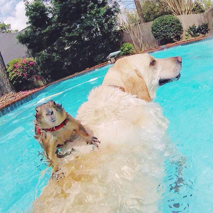 Çayır köpekleri Bing ve Swarley 11