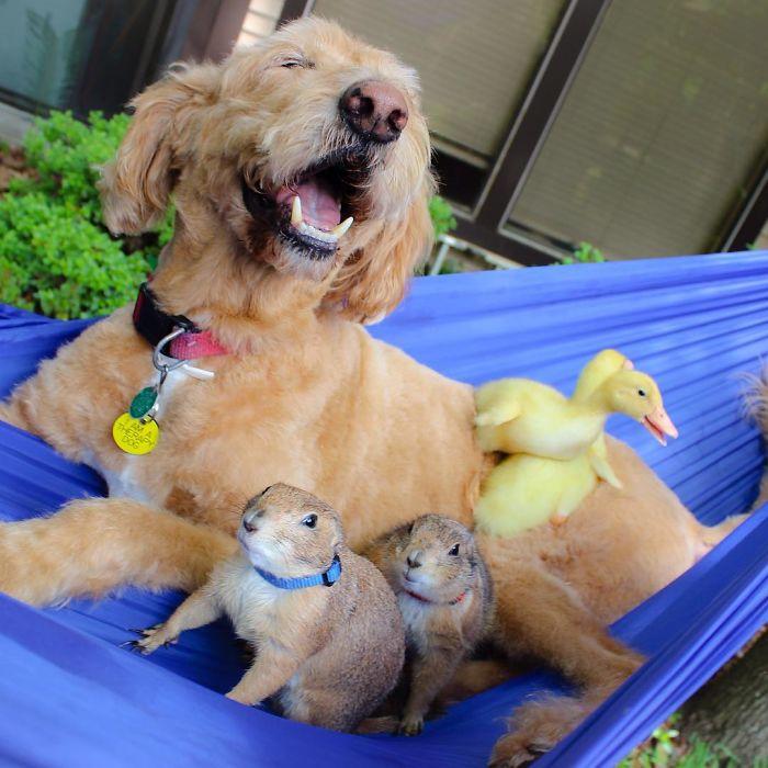 Çayır köpekleri Bing ve Swarley 8
