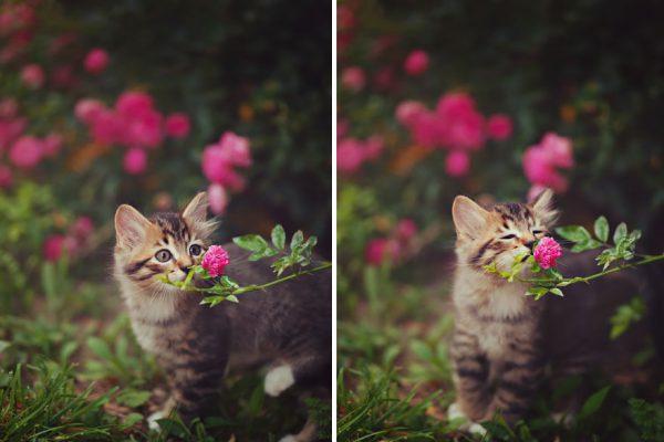 Hayvanlar Çiçek Koklarsa