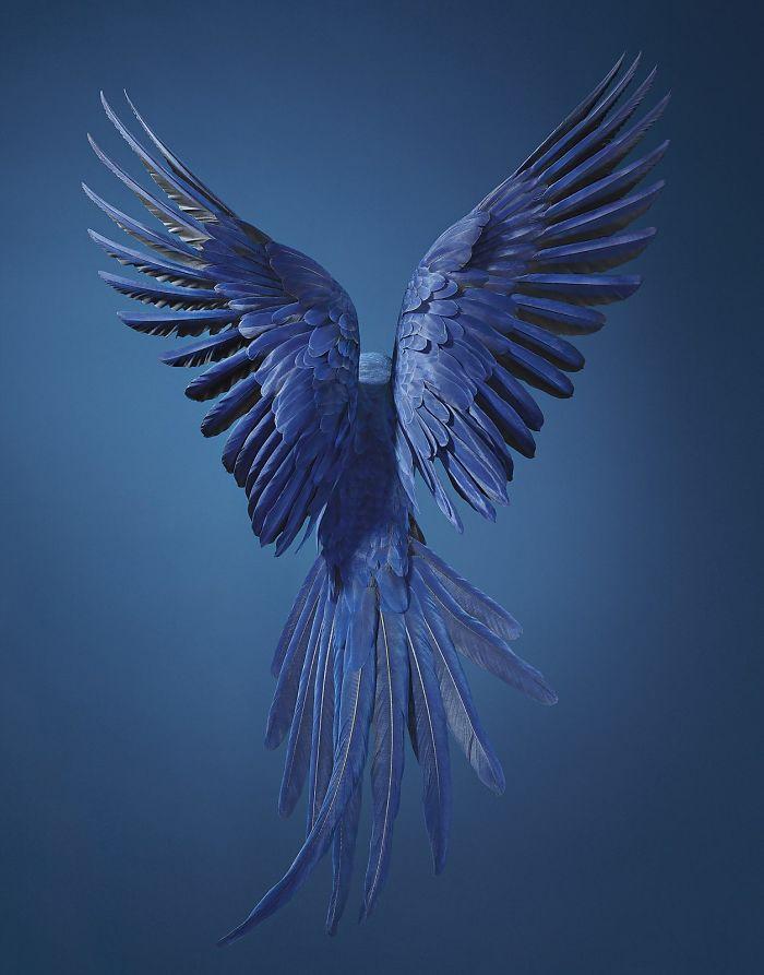 Sümbül Ara Papağanı
