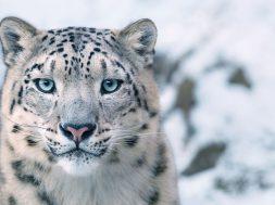 tim-flach-nesli-tukenmekte-olan-hayvanlar-6
